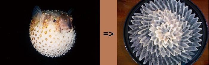 Der Kugelfisch einmal lebend in voller Größe abgebildet, daneben in zahlreiche Einzelstücke auf einem Teller angerichtet.